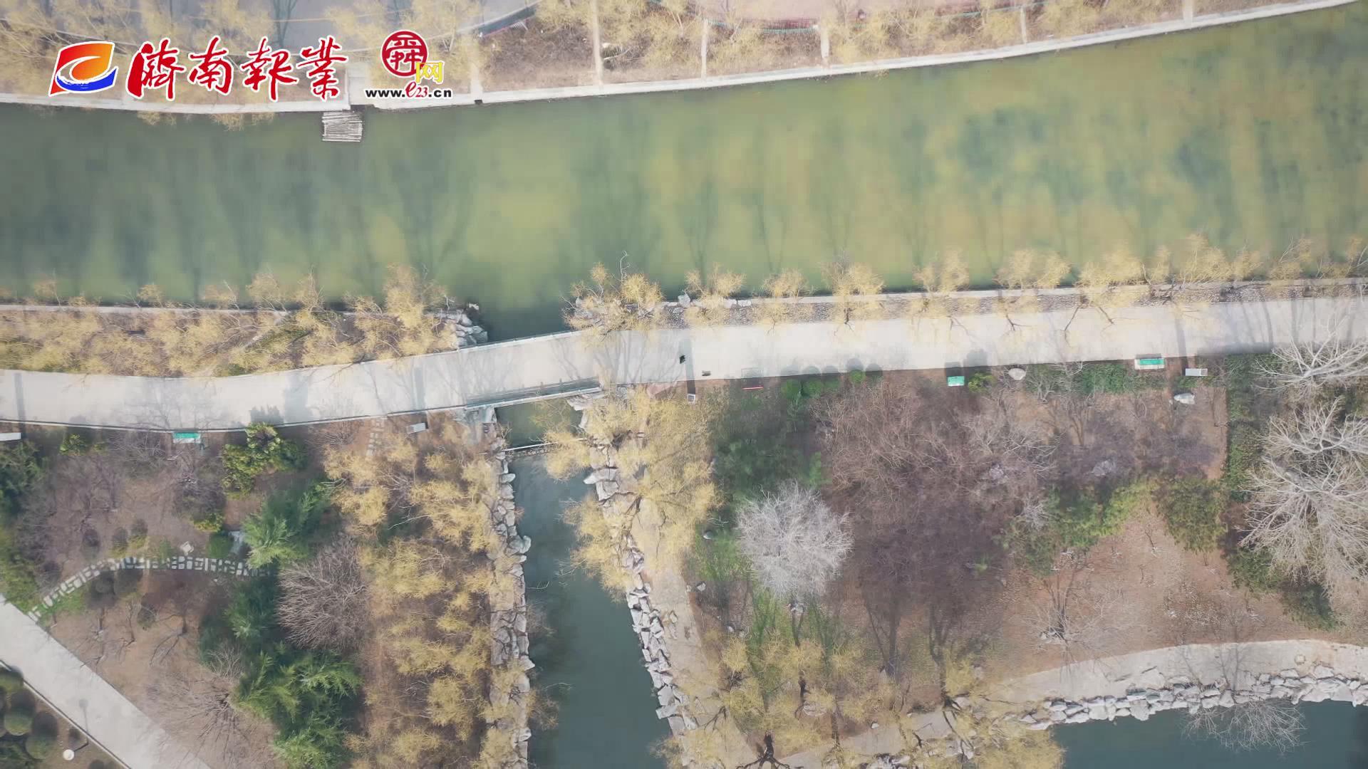 【舜网云踏青(四)】莱芜区莲河公园:杨柳依依 春水潺潺